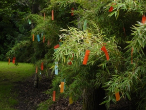Tanzaku, önskingarna, vaggar i vinden på bambun